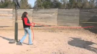 How to Train a Horse on a Lunge Line