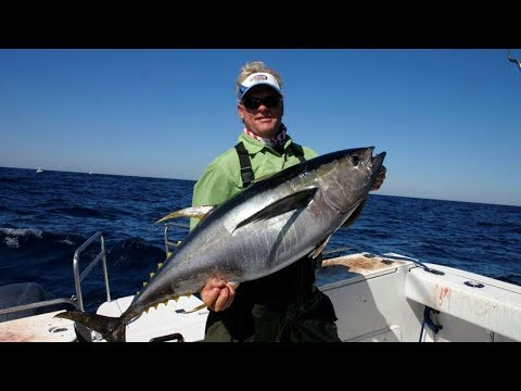 Offshore Fishing Yellowfin Tuna on DOA Lures in Venice Louisiana