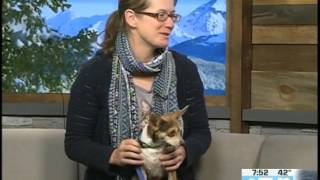 Eagle County Animal Shelter Rhiannon Rowe 05.16.17 Good Morning Vail