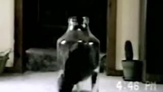 кошка в Бутылке