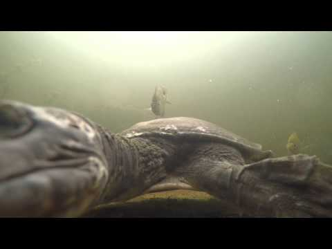 Animals Curious About a GoPro Camera Compilation