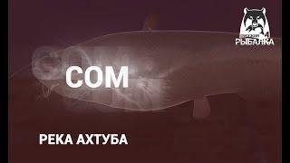 RF4 РР4 Русская Рыбалка 4 Река Ахтуба Сом