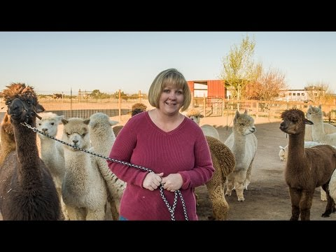 A Day In The Life: Humming Desert Alpacas