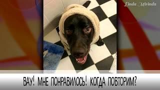 Домашние животные впервые принимают ванну. Как помыть кота / собаку и при этом остаться живым