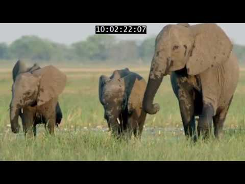 Elephant: King Of The Kalahari