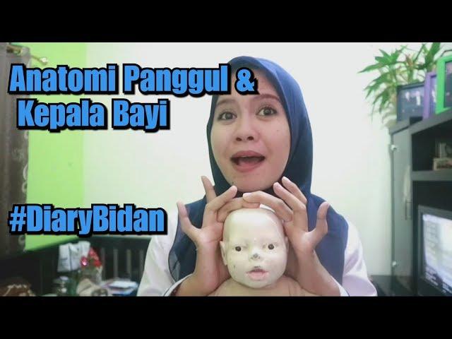 Anatomi Panggul dan Kepala Janin / Bayi #DiaryBidan