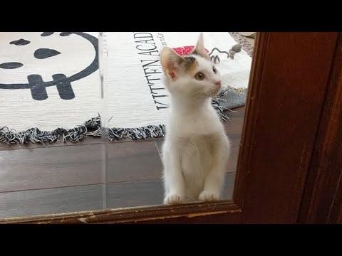 Kitten Close Up 2017-09-14