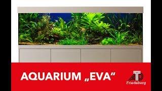 Vorstellung unserer Aquarium Kombination Eva