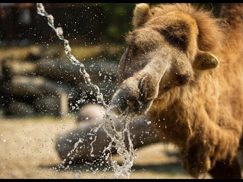 Calgary Zoo Animals Stay Cool In The Heat