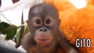 Cute Monkeys Part #16 - Funny Baby Monkey will make you have Relaxing moment 2018