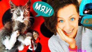 видео котёнок играет в лотке (kitten playing in the tray for the toilet)