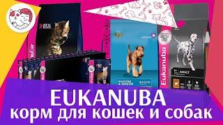 видео Корм для кошек Eukanuba (Эукануба): обзор, отзывы и цены