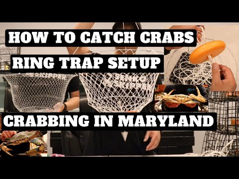 Crabbing In Maryland - How To Setup A Ring Trap