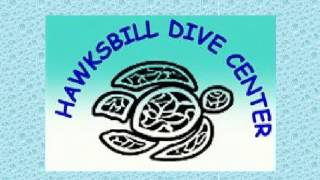 Get Diving Courses & Lessons Online in Lowest Price