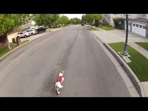 Jack Russell Inline Skate with GoPro helmet mount