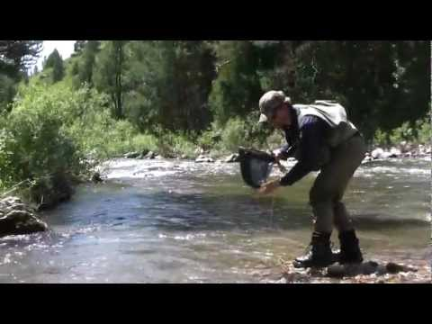 Episode 6: Yellowstone Cutthroat Trout in Southeast Idaho