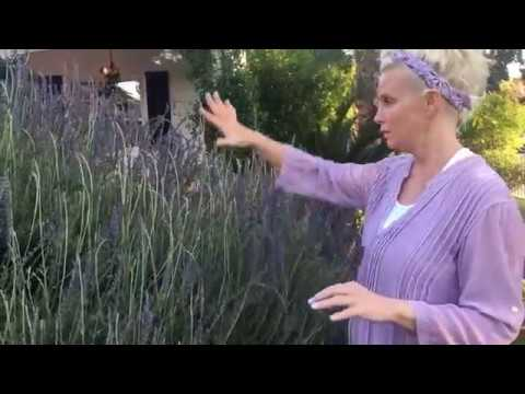 de-stress-with-monica-potter-home's-lavender-products