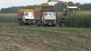 уборка кукурузы на силос в Белоусовщина