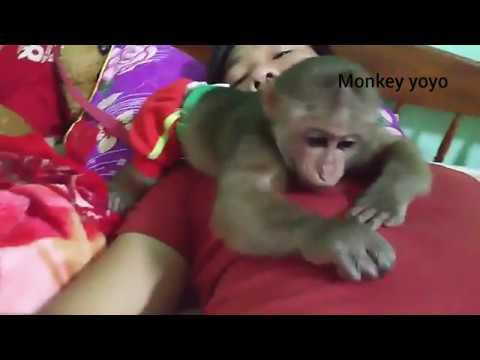 Monkey baby yoyo ride on tired. not video recording