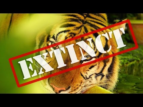 8 Animals That May Not Survive 2016