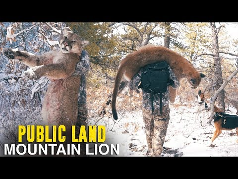 HUGE MOUNTAIN LION IN NEW MEXICO - Part 3