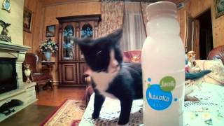 Молоко - Лосево
