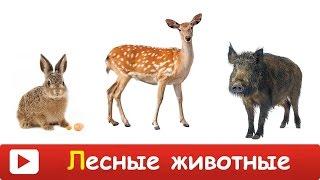 [ ЛЕСНЫЕ ЖИВОТНЫЕ для ДЕТЕЙ ] Развивающий МУЛЬТИК для ДЕТЕЙ - лесные животные. Презентация для детей