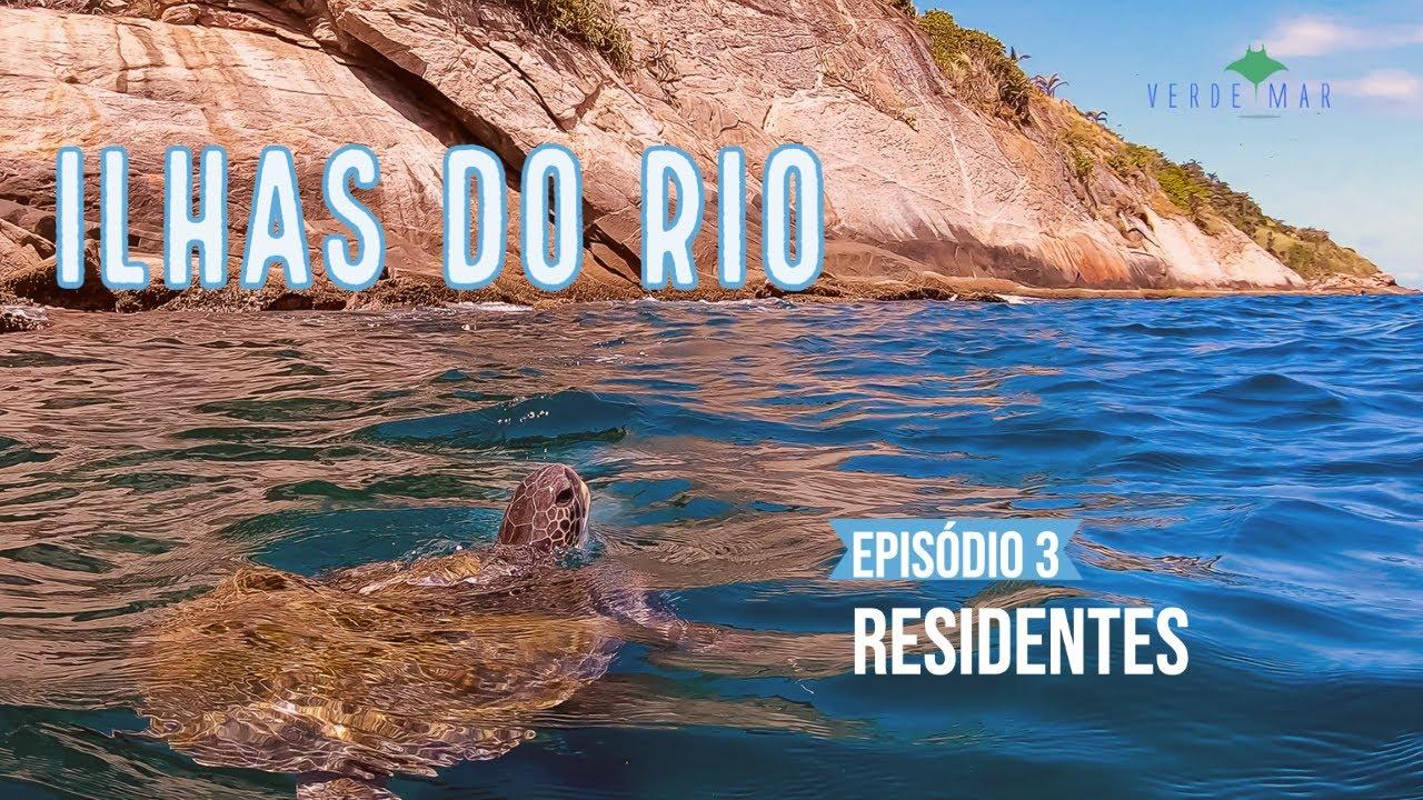 Ilhas do Rio Weberie #3 - As tartarugas marinhas residentes das Ilhas Cagarras