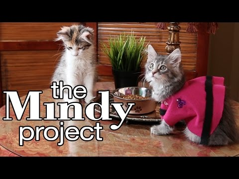 The Mindy Project - Cute Kitten Edition