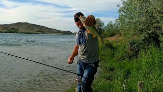 Река Или супер рыбалка на жереха