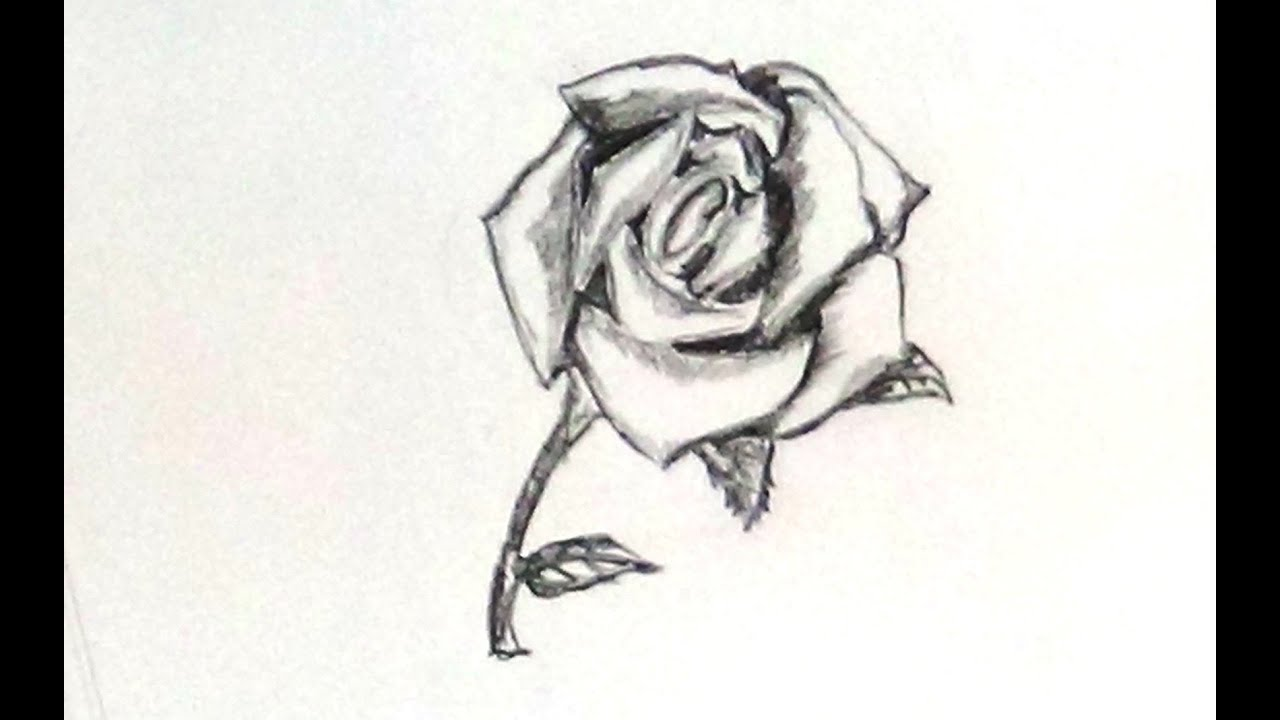 It is a graphic of Crazy Rose And Stem Drawing