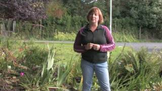 Gardening Tips : Does Music Affect Plant Growth?