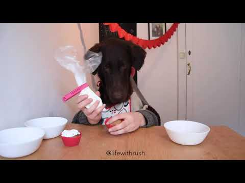 Flatcoated retriever decorates pupcakes for Valentine's Day