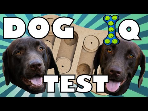 CAN THESE DOGS SOLVE THE PUZZLES?  Dog IQ Test
