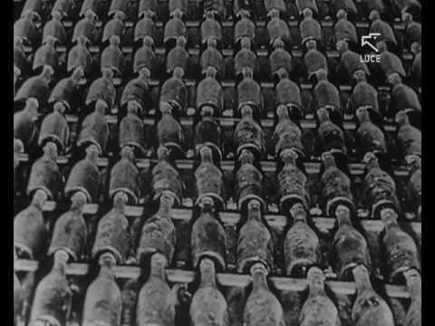 Gli stabilimenti piemontesi della Cinzano (1960)
