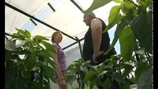 Выращивание баклажанов -  уДачные советы.mp4(http://sovetysadovodam.com/?p=1529 Из этого видео вы узнаете какие необходимо соблюдать условия для успешного выращивания..., 2012-03-03T14:11:15.000Z)