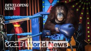 Exposing Animal Abuse in Wildlife Parks   Developing News