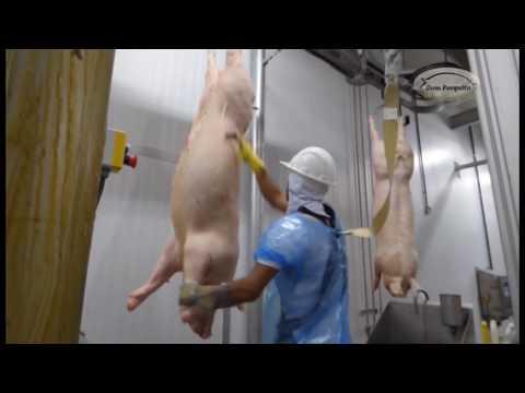 Abate de suínos Dom Porquito