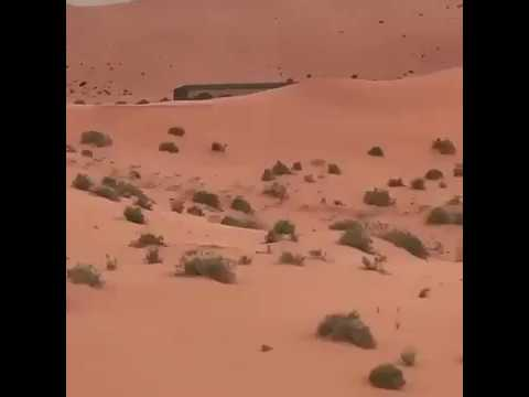 شاهد.. قطيع من الغزلان في أحد محميات السعودية
