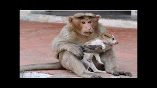 Animals Rescuing Other Animals - Ultimate Emotional and Amazing Compilation