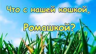Заболела кошка Ромашка. Не спасли. (02.18г.) Семья Бровченко.