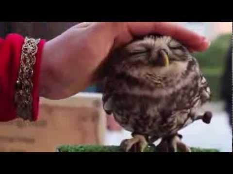 Время Йо-Кай — ТВ-программа на Рамблер/видео