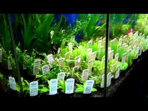 What's New at Aquariums West Tropica Plants Singapore Plants Branch Wood 12/14/12