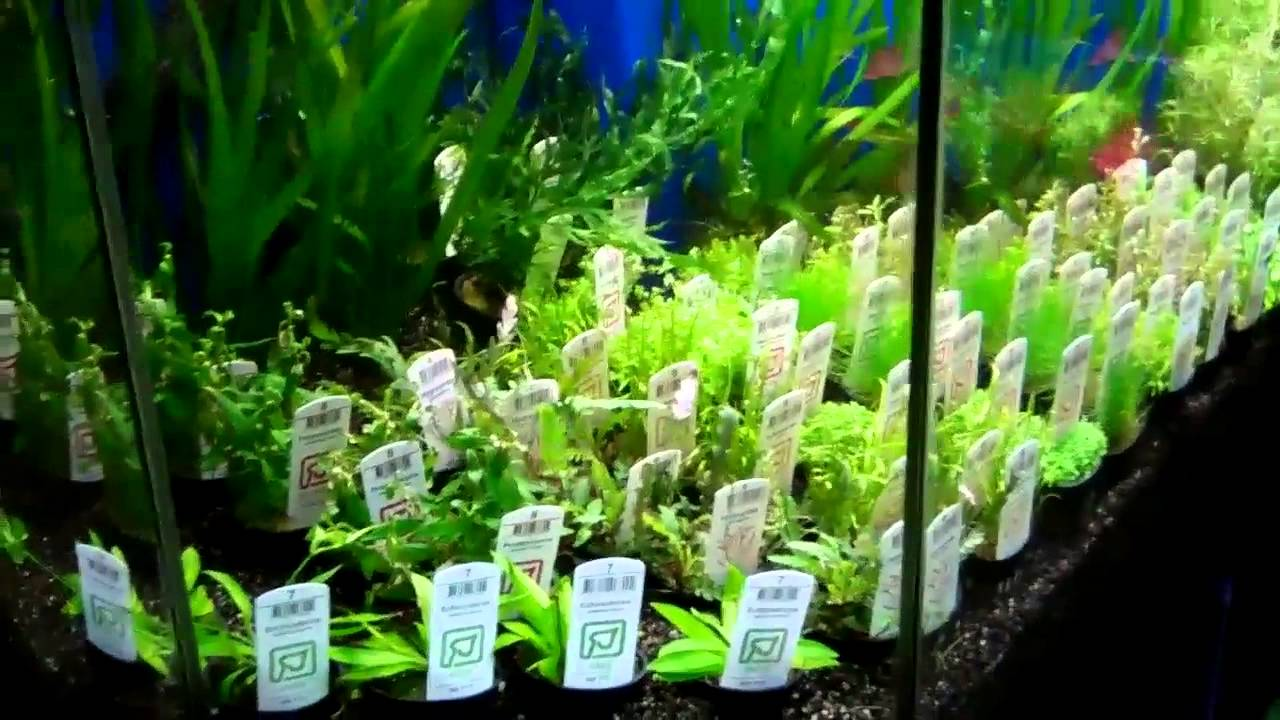 What S New At Aquariums West Tropica Plants Singapore Branch Wood 12 14 You