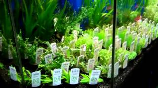 What's New At Aquariums West Tropica Plants Singapore Plants Branch Wood 12/14/12