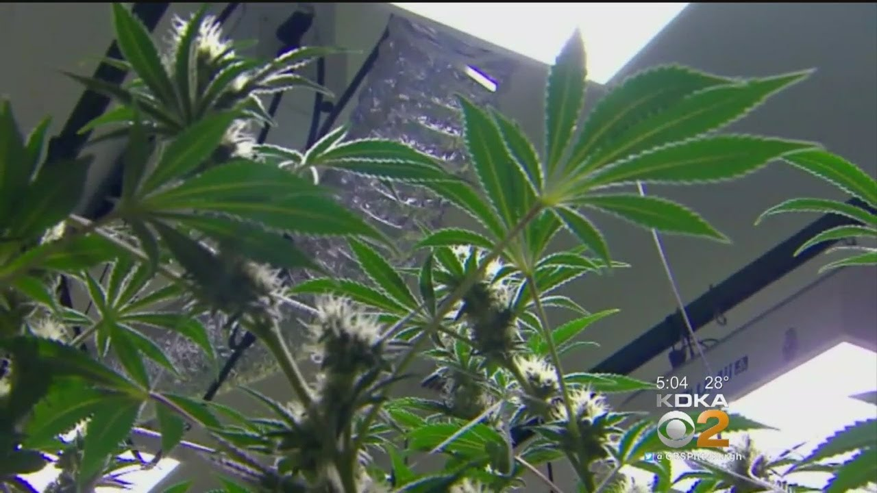 First Of Its Kind Medical Marijuana Certification Center Opens In