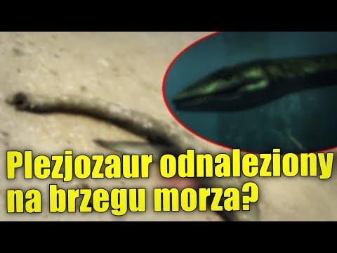 Szczątki dinozaura na plaży w Georgii? Morze wyrzuciło na brzeg niezwykłą istotę!