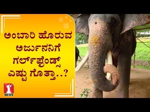 ಅಂಬಾರಿ ಹೊರುವ ಅರ್ಜುನನಿಗೆ ಗರ್ಲ್ಫ್ರೆಂಡ್ಸ್ ಎಷ್ಟು ಗೊತ್ತಾ..? | Dasara Elephant Arjuna | Mysuru Dasara