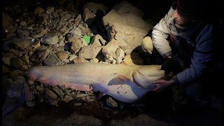 Битва с ГИГАНТСКИМ сомом Big catfish