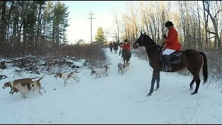 Winter Foxhunting in Michigan 2018